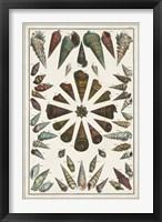 Framed Grand Seba Shells II