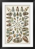 Framed Grand Seba Shells V