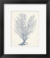 Framed Antique Coral Collection II