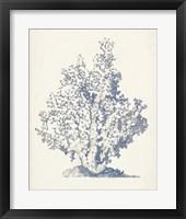 Antique Coral Collection IV Framed Print