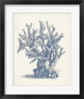 Framed Antique Coral Collection V