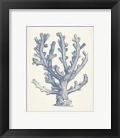 Framed Antique Coral Collection VI