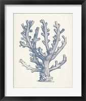 Antique Coral Collection VI Framed Print