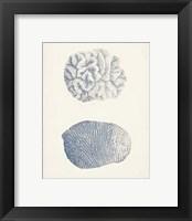 Framed Antique Coral Collection VII