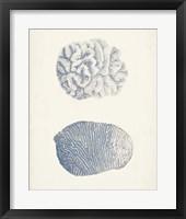 Antique Coral Collection VII Framed Print