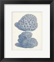 Framed Antique Coral Collection VIII