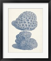 Antique Coral Collection VIII Framed Print