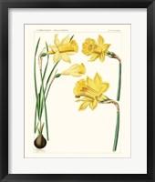 Framed Bright Botanicals I