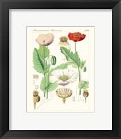 Framed Bright Botanicals II