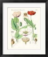 Bright Botanicals II Framed Print