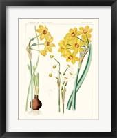 Bright Botanicals III Framed Print