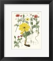 Framed Bright Botanicals IV
