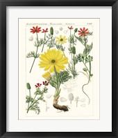 Bright Botanicals IV Framed Print