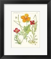 Framed Bright Botanicals V