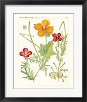 Bright Botanicals V Framed Print