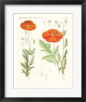 Bright Botanicals VI Framed Print