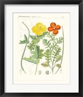 Framed Bright Botanicals VII
