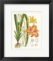 Framed Bright Botanicals VIII