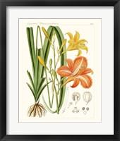 Bright Botanicals VIII Framed Print