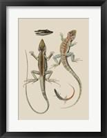 Framed Antique Lizards II