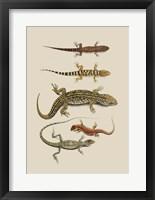 Framed Antique Lizards III