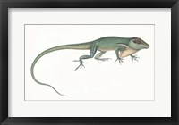 Framed Antique Chameleon