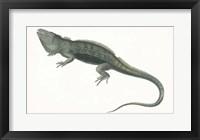 Framed Antique Iguana
