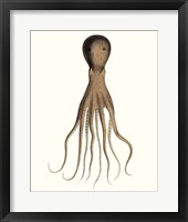 Framed Antique Octopus Collection III