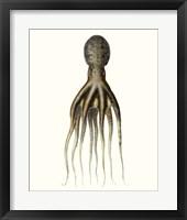 Framed Antique Octopus Collection V