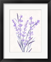 Lavender Land I Framed Print