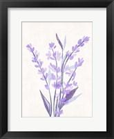 Lavender Land II Framed Print