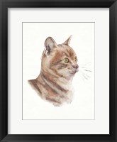 Framed Orange Cat I