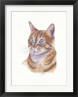 Framed Orange Cat II