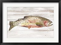 Framed Spotted Trout II