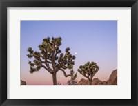 Framed Joshua Tree Silence