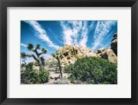 Framed Bounty Of Nature Joshua Tree