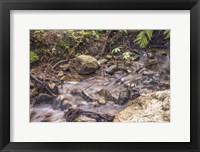 Framed Delicate Creek