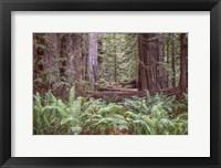 Framed Get Lost In The Redwoods