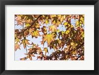 Framed Face Of Autumn 1
