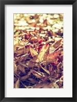 Framed Face Of Autumn 2