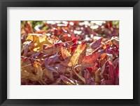 Framed Face Of Autumn 3