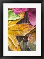Framed Autumn's Closeup