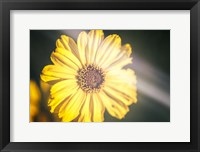 Framed California Floral Love In Yellow Retro
