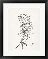 Framed Floral Ink Study VI