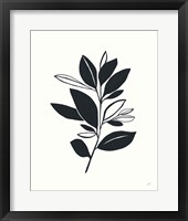 Framed Bay Leaves II