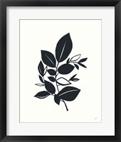 Framed Bay Leaves I