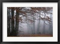 Framed Autumn Paintings