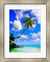 Framed Sanibel Island