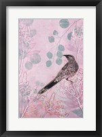 Framed Dusk Wattlebird in Pink