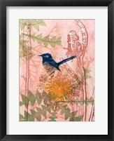 Framed Little Blue Wren
